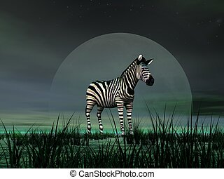Zebra by moonlight