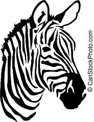zebra, cabeza