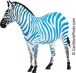 zebra, con, tiras, de, azul, color.