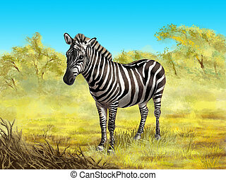Zebra - Wildlife: zebra in its native african environment....