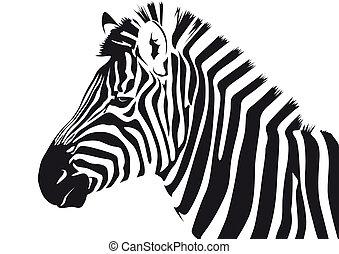 Zebra - Abstract vector illustration of a zebra
