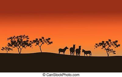 zebra family of silhouette in hills
