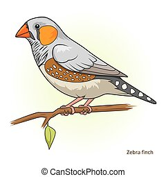 Zebra finch bird educational game vector