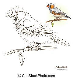 Zebra finch bird learn to draw vector - Zebra finch learn...
