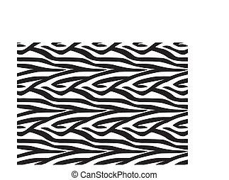 zebra, fond