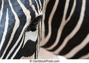 zebra, helft