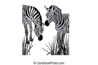 Zebra - Illustration of two zebras