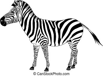 Illustration of zebra