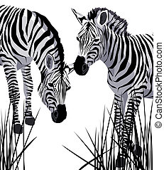 Zebra - Illustration with zebras