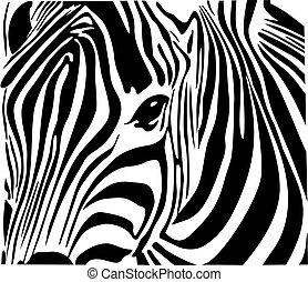 Zebra  - Illustration of beautiful zebra isolated on white