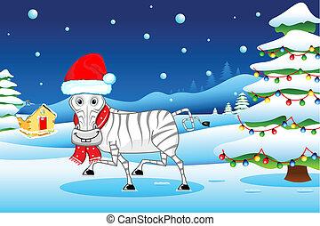 zebra, in, natale, umore