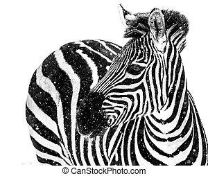 Zebra in Snow IX