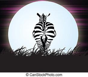 Zebra in the night
