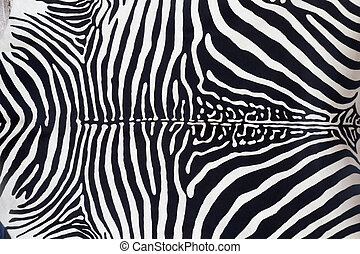 Zebra leather skin texture painted