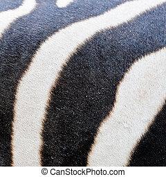 Zebra line background