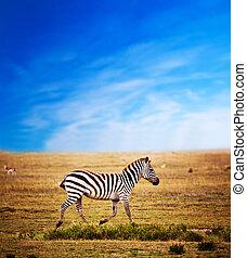 zebra, på, afrikansk, savanna.