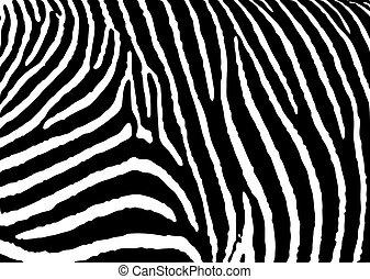zebra, patrón, grande