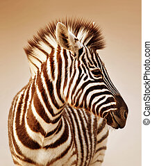 Zebra portrait - Close-up portrait of a baby zebra; Etosha;...