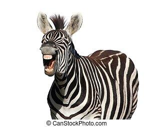 zebra, risa, o, grito