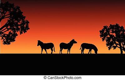 Zebra silhouette in fields