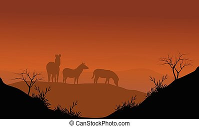Zebra silhouette in hills