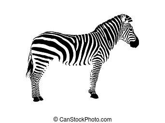 zebra, silueta