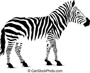 zebra., silueta