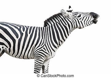 Zebra singing pose cutout