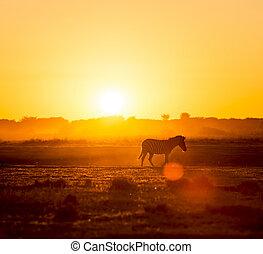 zebra, sonnenuntergang, afrikas