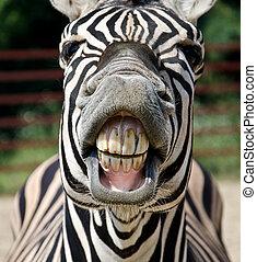 zebra, sorriso