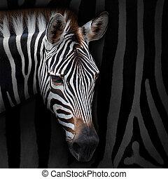Zebra - Close-up zebra with background zebra stripes.