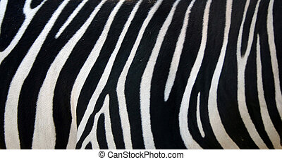 A close up of the side of a zebra.