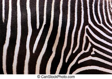 Zebra Stripes - Close-up abstract photo of zebra stripes
