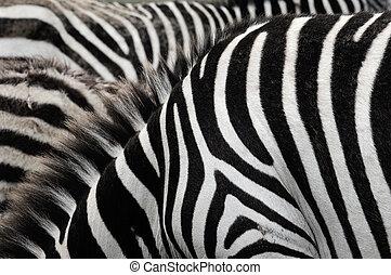 Zebra stripes.