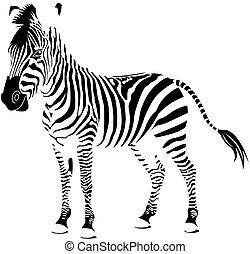 Isolated zebra silhouette texture detail