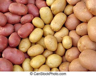 zebrane żniwa, kartofel, bulwy