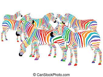 zebras, coloridos