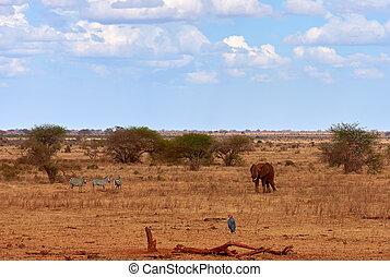 zebras, elefanten, savanne, bäume., afrikas, kenia, safari., landschaftsbild, ansicht