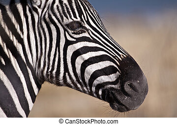 Zebra's head no 2