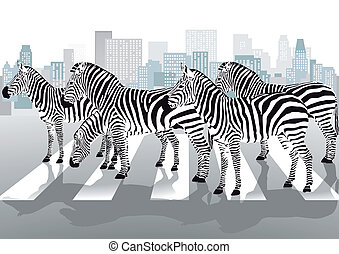 Zebras on pedestrian crossing