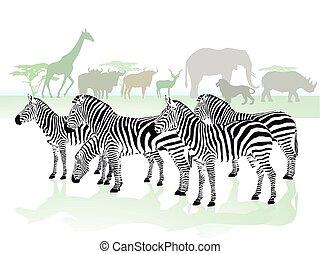 Zebras Tiere.eps