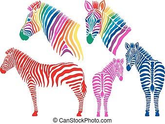 zebras, vektor, satz, gefärbt
