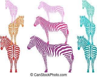 zebre, vettore, set, colorito