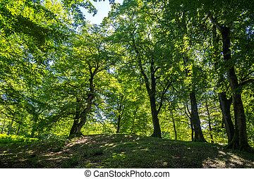 Zeda-gordi, Georgia. Forest of Okatse canion. Georgia