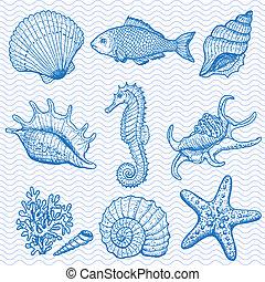 zee, collection., origineel, hand, getrokken, illustratie