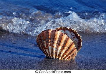 zee, en, zandig strand, met, schaal