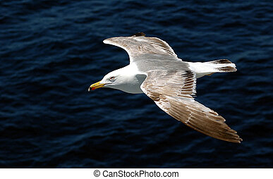 zee gull