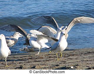 zee-gull
