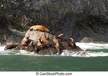zee leeuwen
