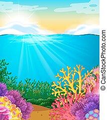 zee, onder, koraalrif